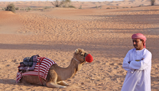 Dubai luxury hotels - Al Maha is the best place to experience Dubai's desert culture.