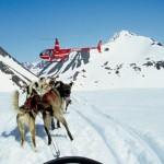 Alaska Dog Sledding