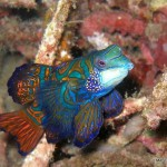 Scuba Diving Lembeh Strait, Indonesia