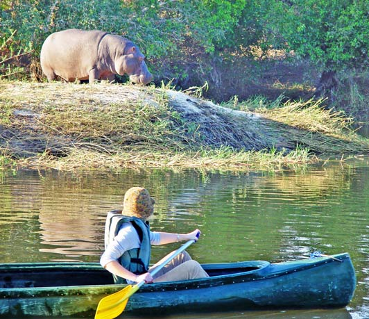 Paddling solo down the Zambezi River is probably not a good idea.
