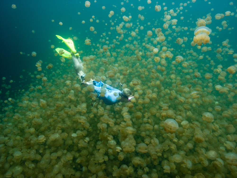 Personalized Tours Snorkeling In Palau And Yap