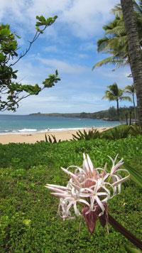 Vacation Rentals In Hawaii Maui Amp Big Island Authentic
