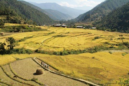 Bhutan's scenic landscapes include beautiful rice paddies like this one.