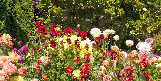 Beautiful Gardens Bloom Across Bainbridge Island, Washington.