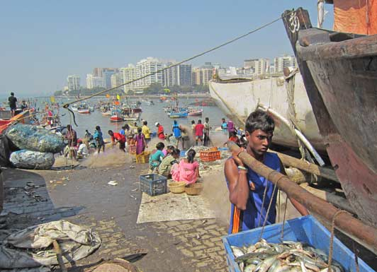 The Sassoon Docks, where catch is unloaded, cleaned, and sold, are a busy hive of activity.