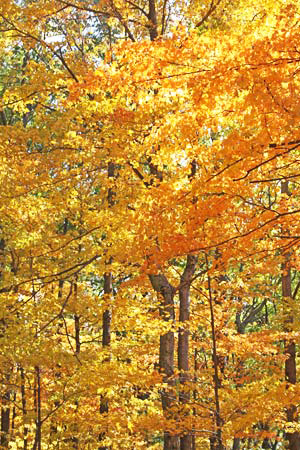 The best-ever fall colors? You'll find them in Brown County, Indiana.