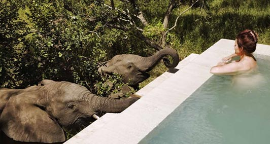 South Africa Safari Trip Report - Authentic Luxury Travel