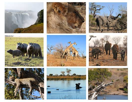 Botswana - the trip of a lifetime for Kathleen and her family.