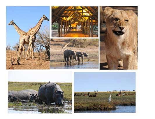 Is there a better place in Africa for seeing wildlife? Probably not.