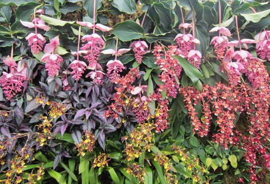 New York Botanical Garden presents stunning floral displays like this vertical wall of orchids.