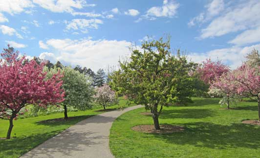 Blooming crabapple, magnolia, and cherry tree create a visual wonderland in the spring.