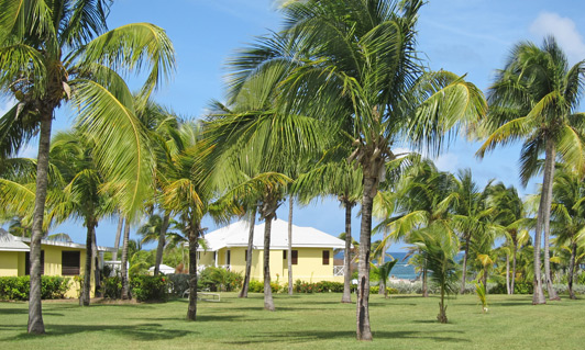 On Nevis, no building can be taller than a coconut palm - like these at Nisbet Plantation Beach Club.