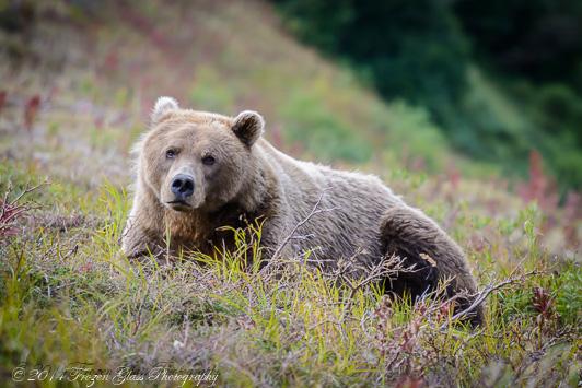 PhotoEssay-11 Alaska