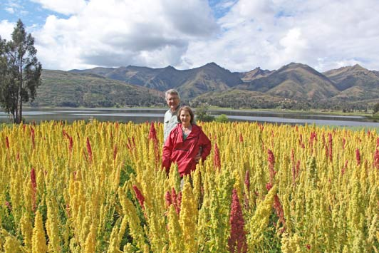 A field of quinoa near Lake Piuray, Peru.