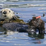 Monterey, CA – Wildlife, Great Food & More