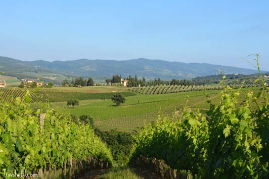 Authentic Tuscany: vineyards.