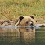 Grizzly Bears, Eagles & Whales – Oh My!