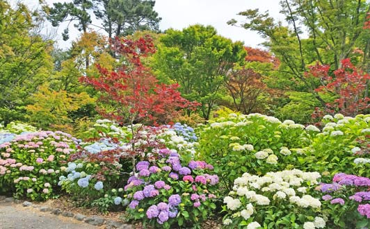 Christchurch, New Zealand is known for beautiful gardens.