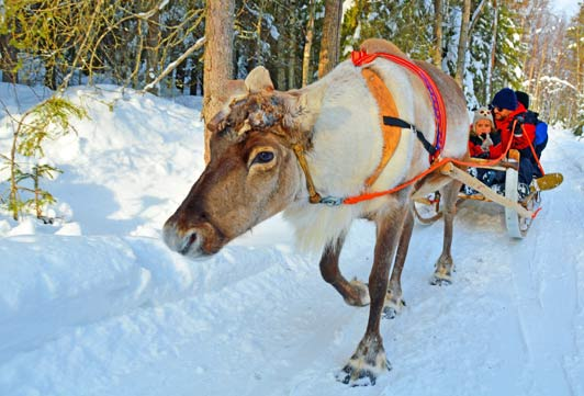 In Rovaniemi, reindeer sleigh rides and snowmobile adventures are offered by Lapland Safaris.