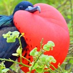 Galapagos Islands for Authentic Travelers