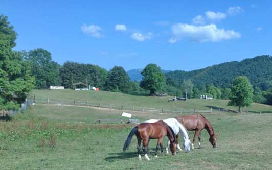 Agriturismi, farm stays found throughout Italy, are especially popular in Friuli-Venezia Giulia.