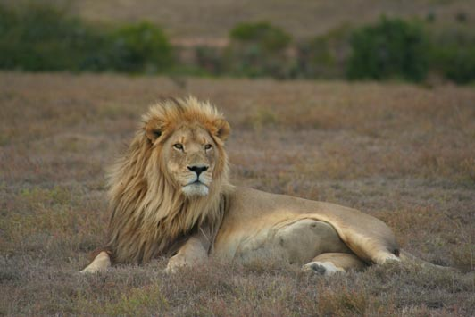 Royal Malewane is located in a private reserve within Greater Kruger National Park.