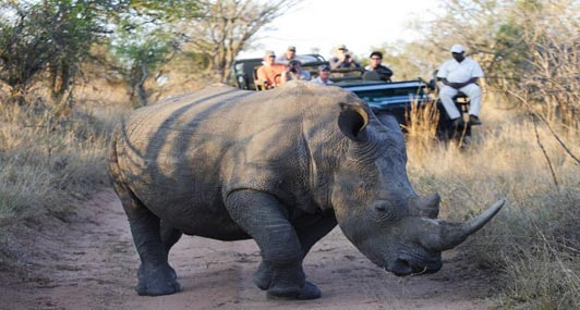 Twice daily game drives are the highlights of every South Africa safari.