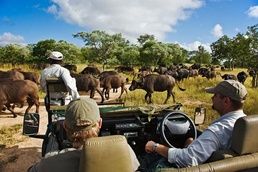 Royal Malewane is known for personalized service and great game viewing.