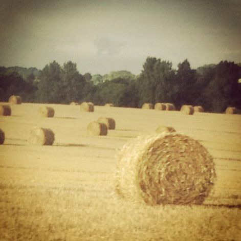 Rolled bales of hay, Normand countryside. Photo credit Doug Hamilton.